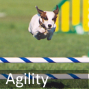 agility Welcome to Obedience Training Club of Palm Beach County