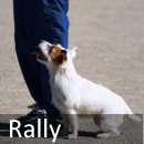 rally Welcome to Obedience Training Club of Palm Beach County