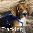 tracking Welcome to Obedience Training Club of Palm Beach County